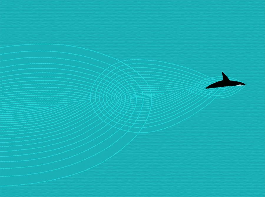 orca-ripples